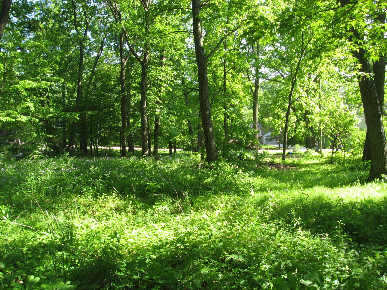 Lt1 Quinn Rd, Waukesha, Wisconsin 53189, ,Vacant Land,For Sale,Quinn Rd,1641588