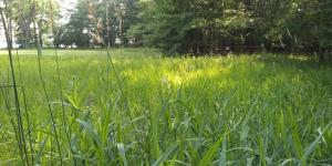 LT 3 Pines Rd, Middle Inlet, WI 54177