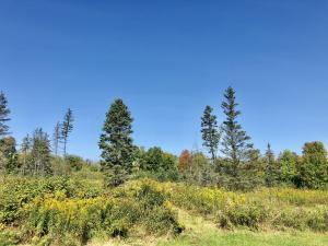6.25 Acres Bigwoods Ln, Beecher, WI 54156