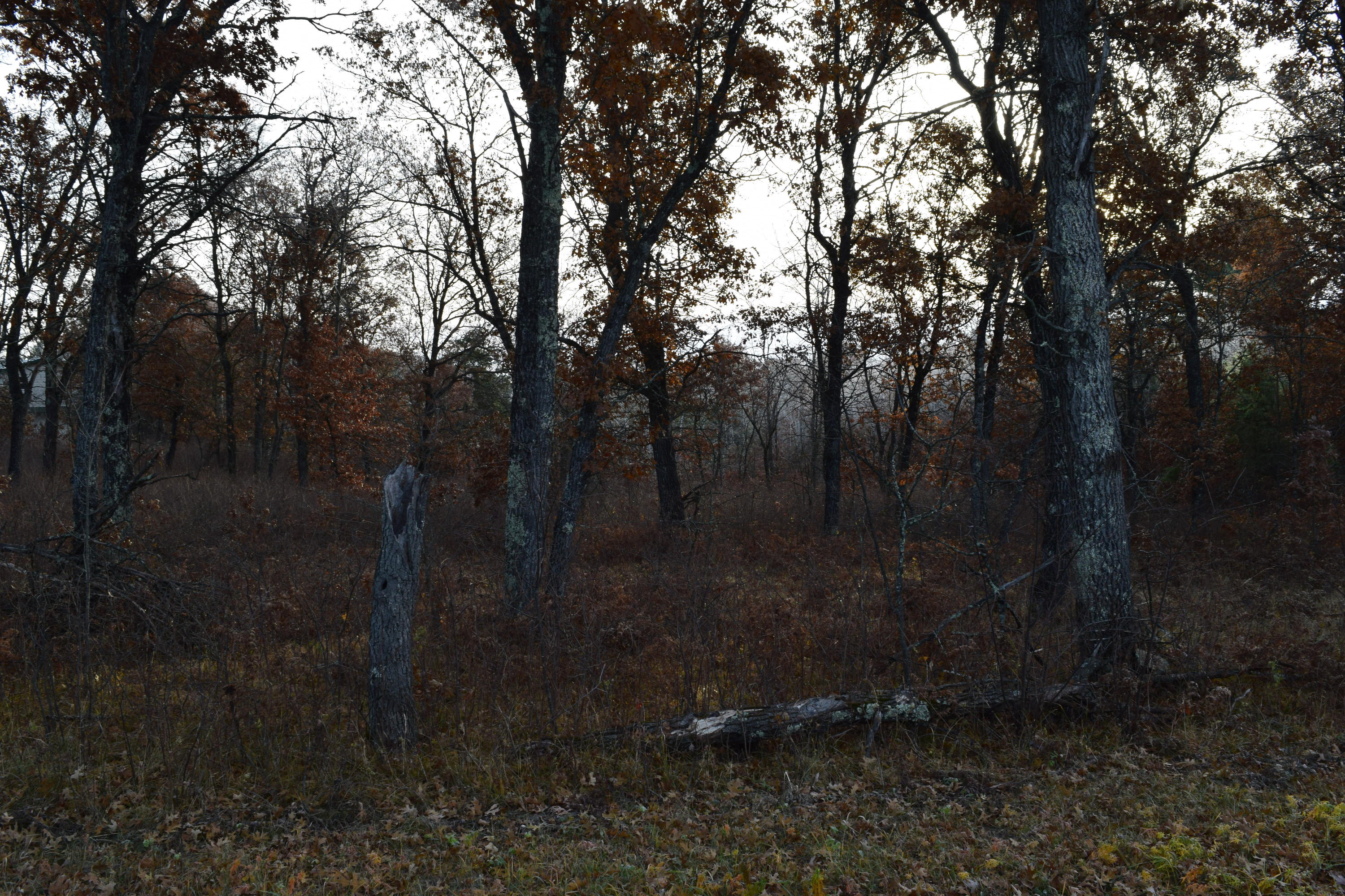 Property for sale at Lt01161 Johnson Falls Rd, Crivitz,  Wisconsin 54114