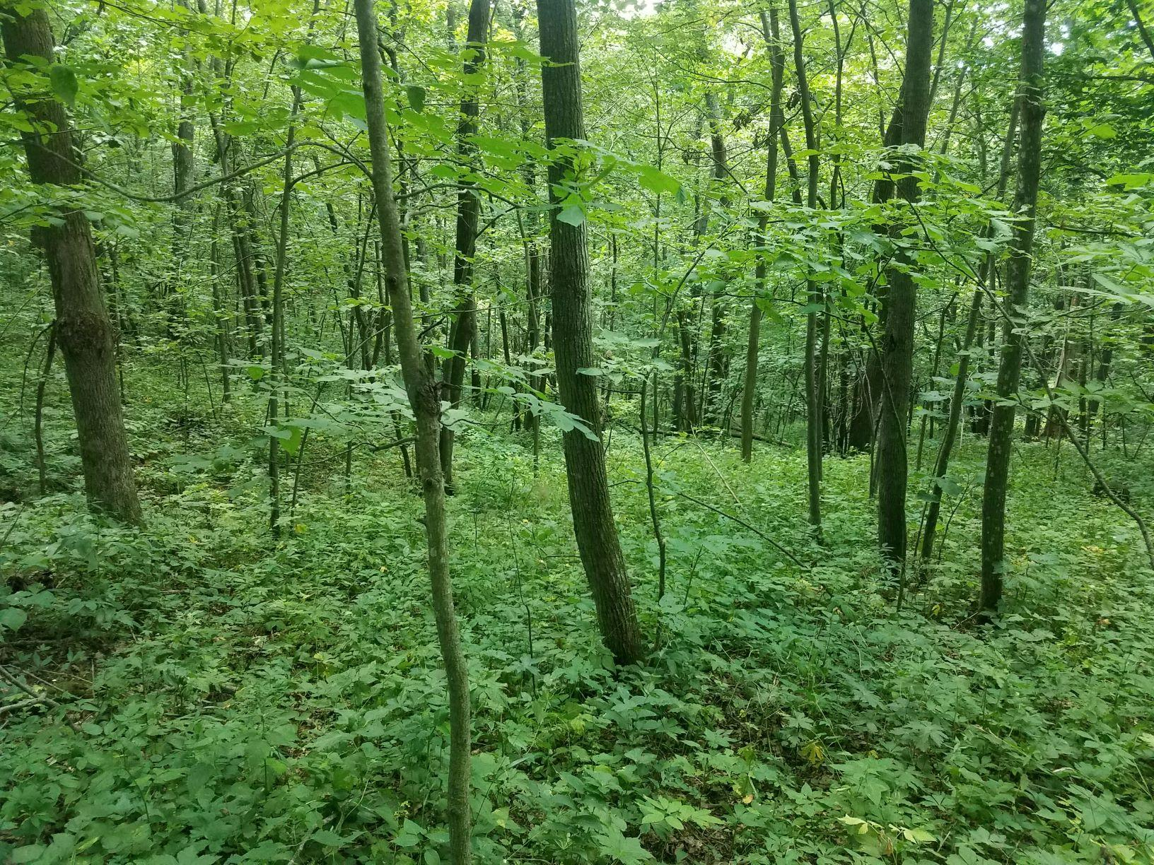 0 Whistle Pass Rd, Dodge, Wisconsin 54625, ,Vacant Land,For Sale,Whistle Pass Rd,1702793