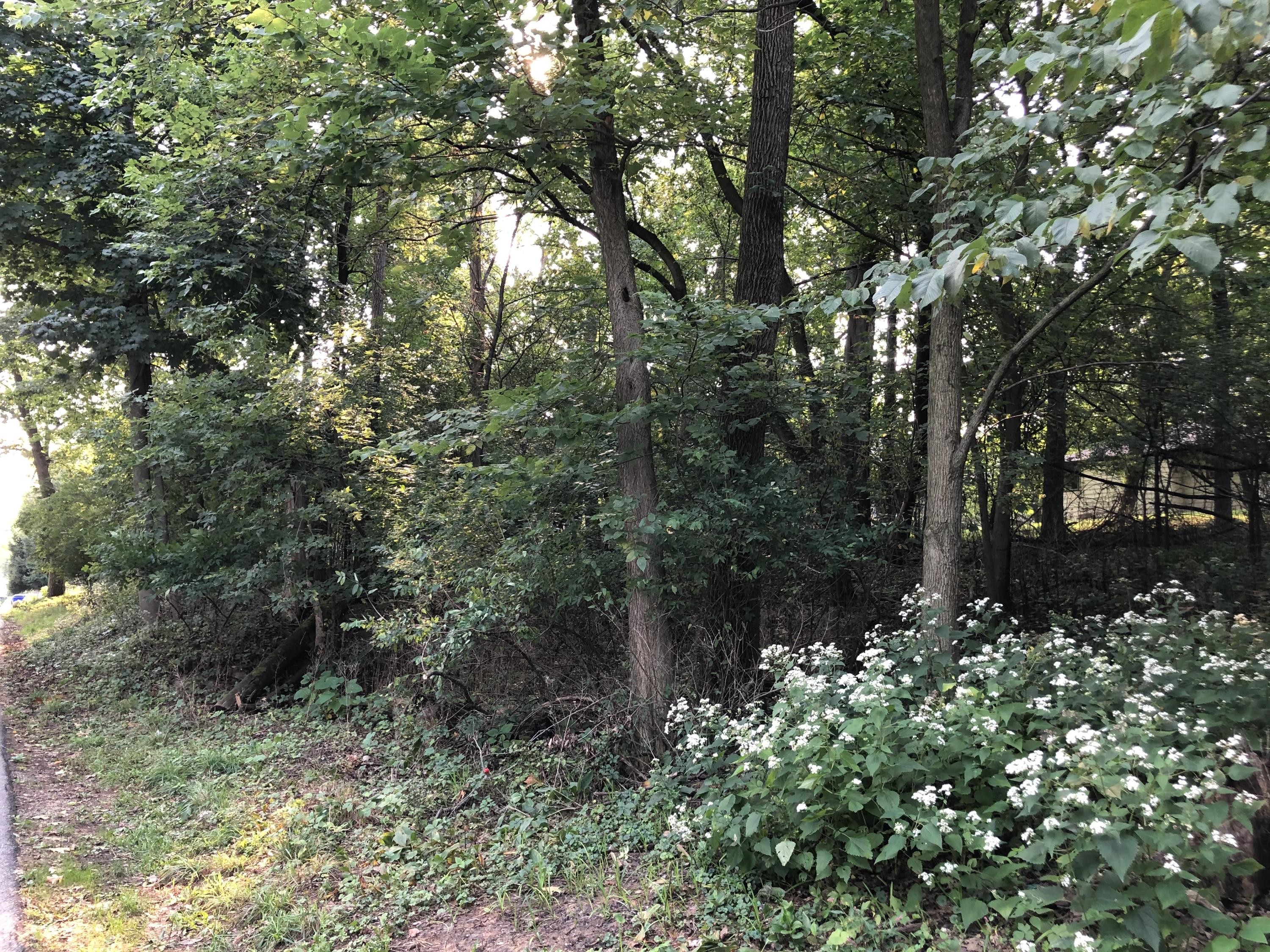 N23W28866 Louis Ave, Delafield, Wisconsin 53072, ,Vacant Land,For Sale,Louis Ave,1710068