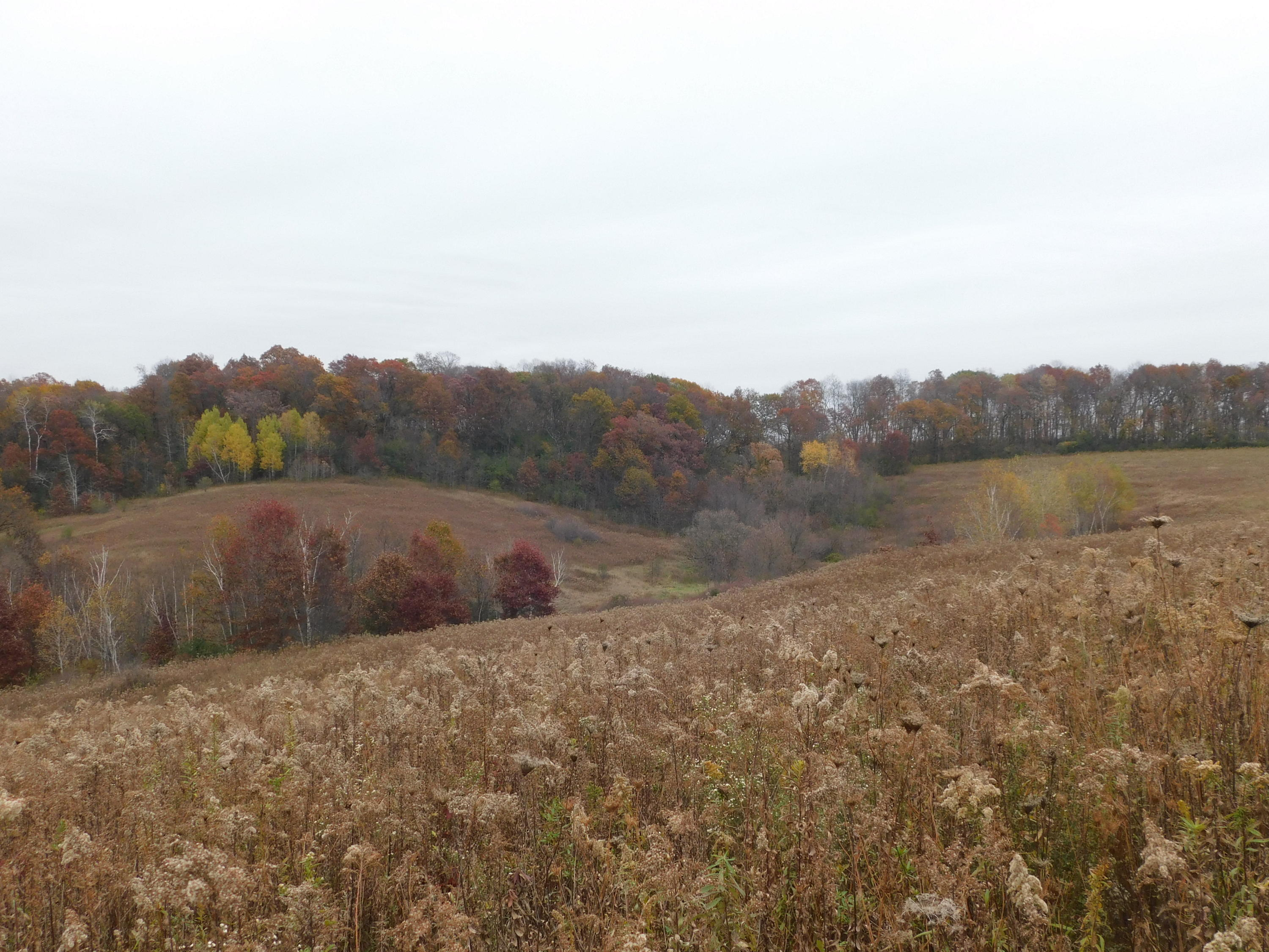 27856 Mainstream Rd, Portland, Wisconsin 54653, ,Vacant Land,For Sale,Mainstream Rd,1719932