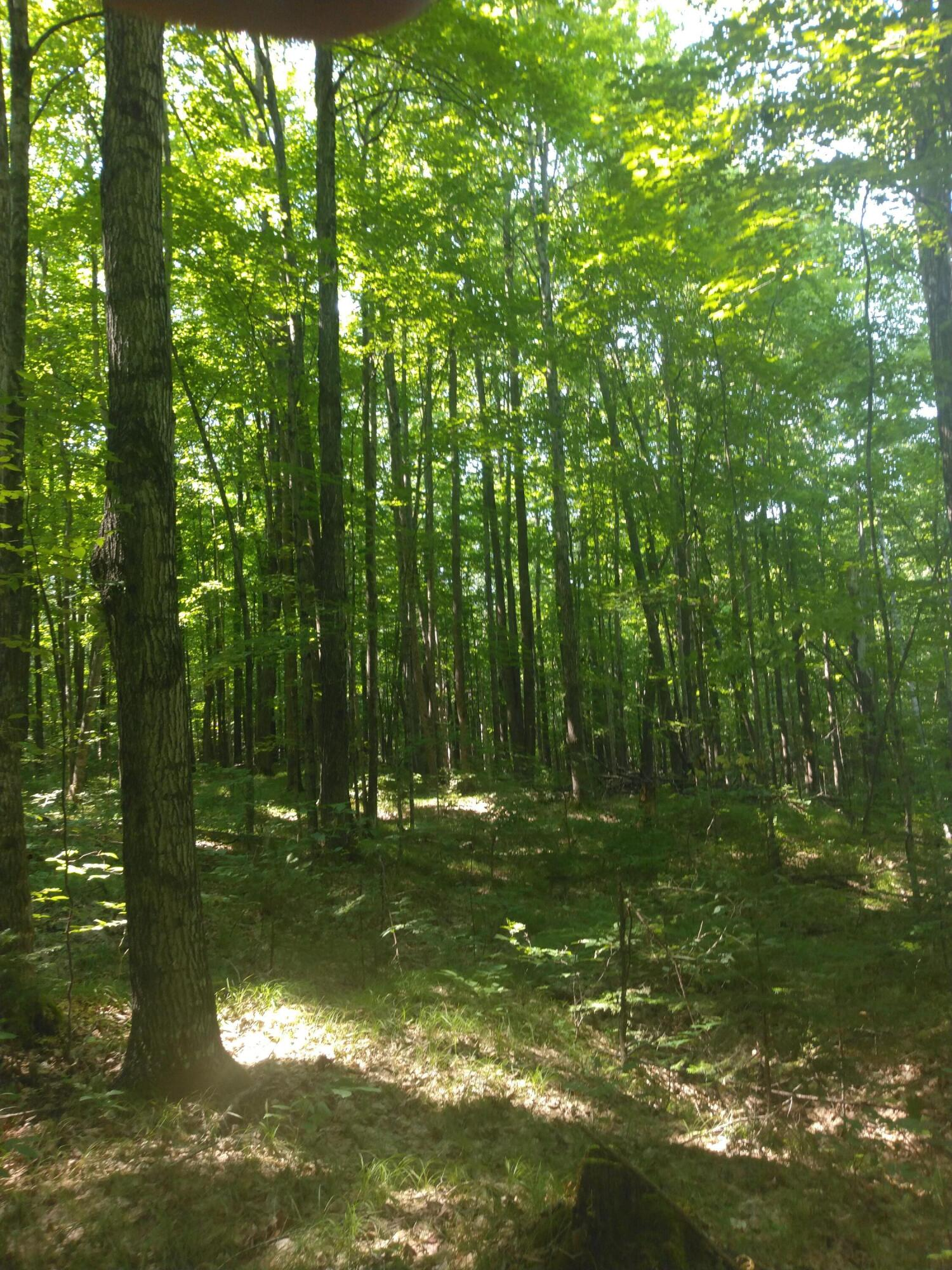 80 Ac. Westberg LN-Fire LN, Amberg, Wisconsin 54102, ,Vacant Land,For Sale,Westberg LN-Fire LN,1755617