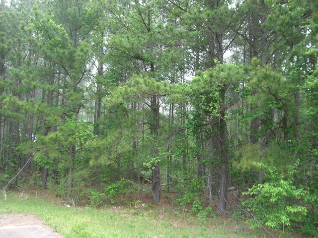 Lot 1 Highway 57  Macon GA