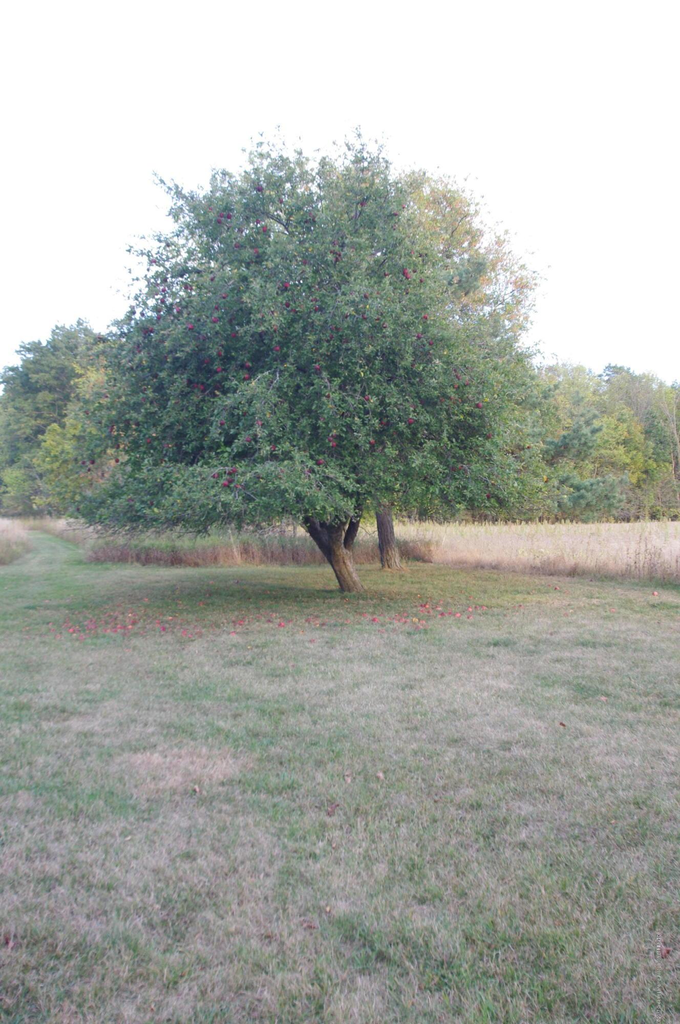 5545 S Krepps Rd - Apple Tree - 42