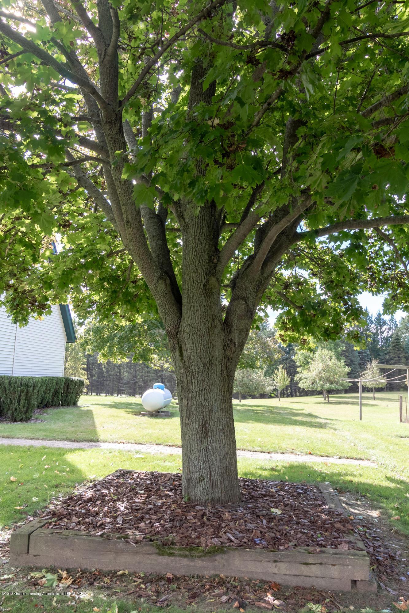 8057 Hunter Rd - Yard - 41