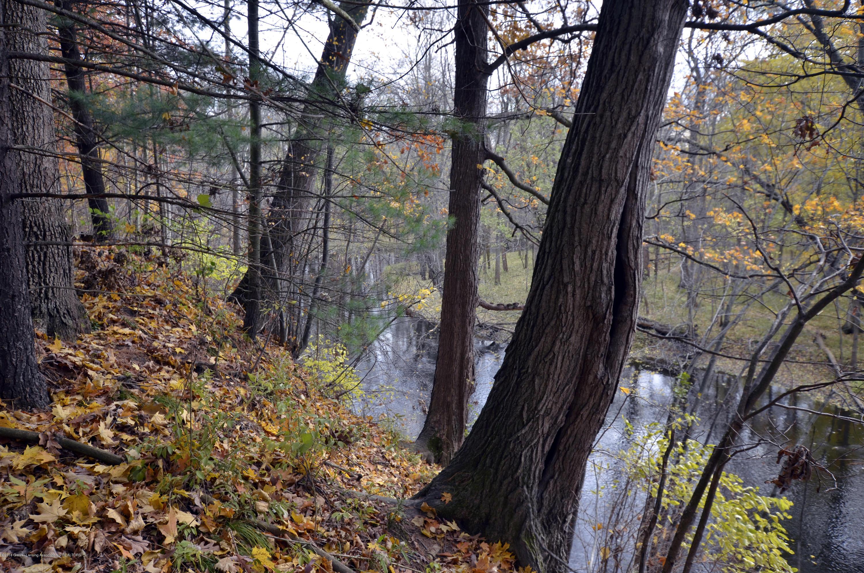 4045 Van Atta Rd - 4045 Van Atta River & Trees - 47