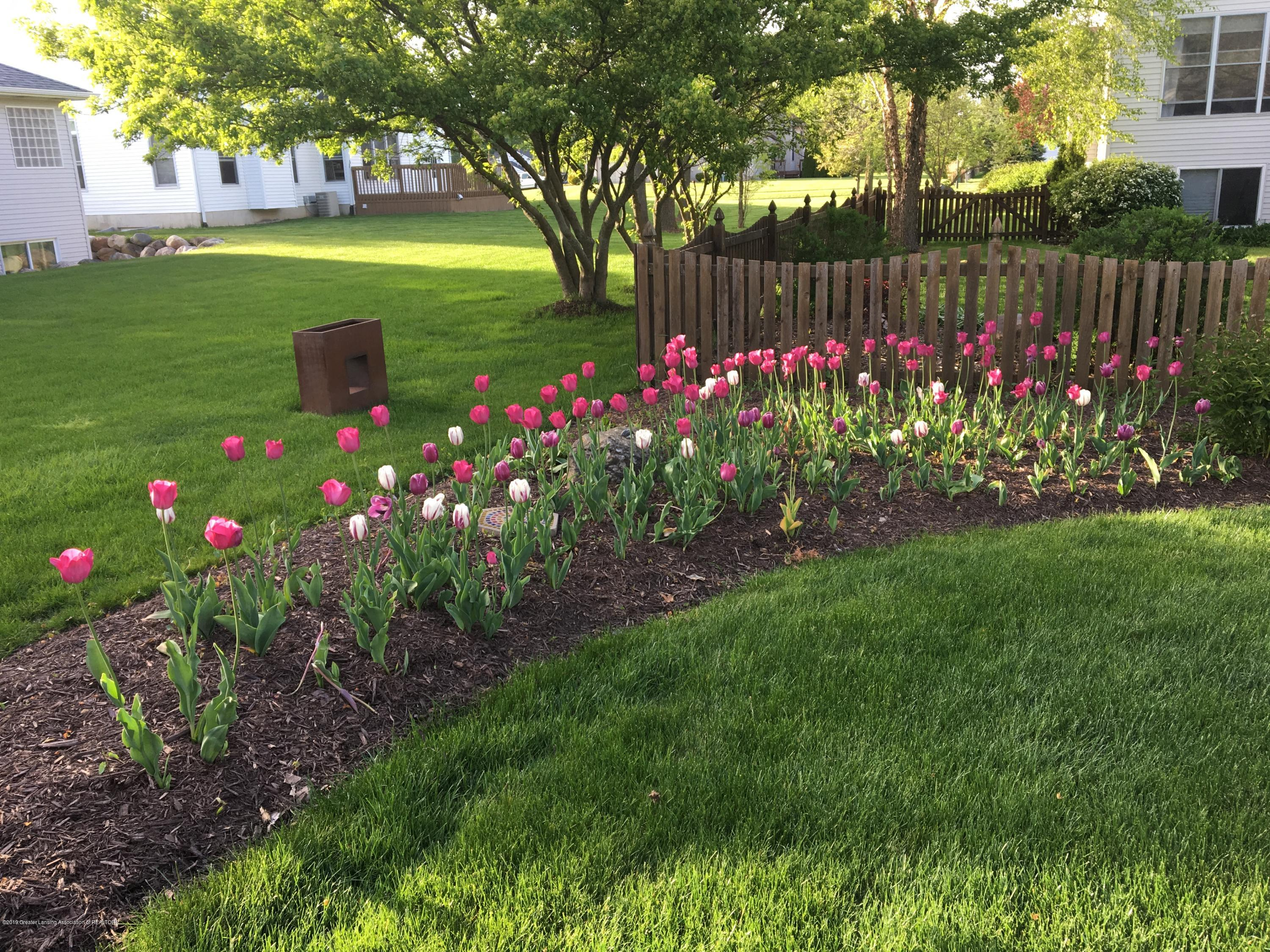 7387 Mallow Ln - 2017 05-15 Tulips in Garden - 47