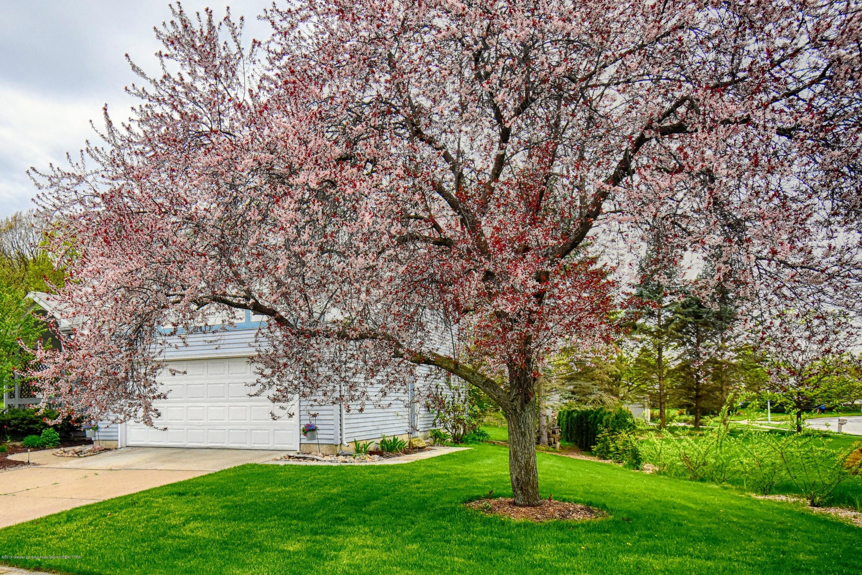 2417 Bush Gardens Ln - Beautiful Front Yard - 2