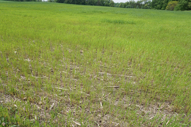 5780 Leland Rd - Leland.crops - 15