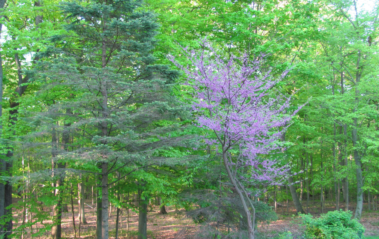 7520 Carmel Ln - Nature Abounds - 44