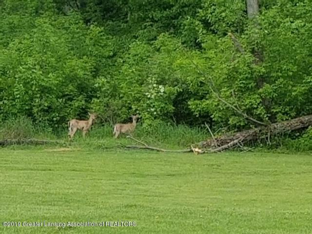 4801 Round Lake Rd - deer - 35