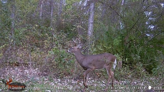 4801 Round Lake Rd - deer - 36