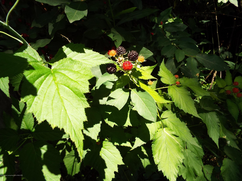 3056 E Lake Lansing Rd - Berries - 4