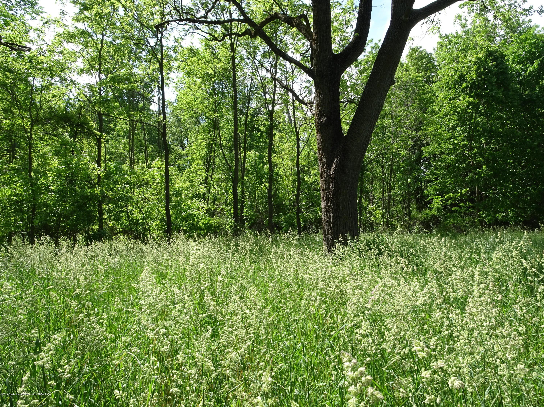 0 Nichols Rd - Large trees - 1