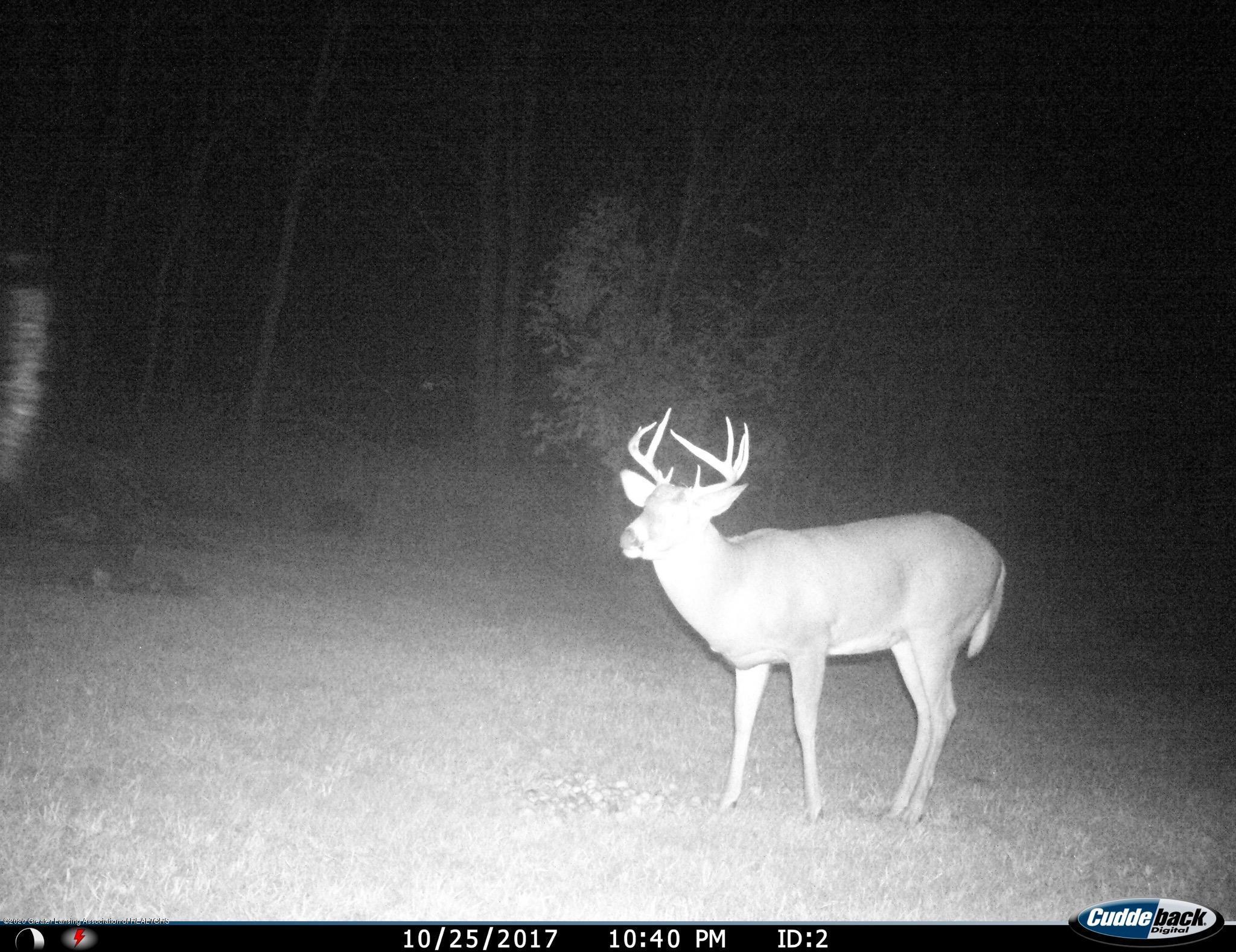 4482 E Clinton Trail - Deer Roam the Property - 26