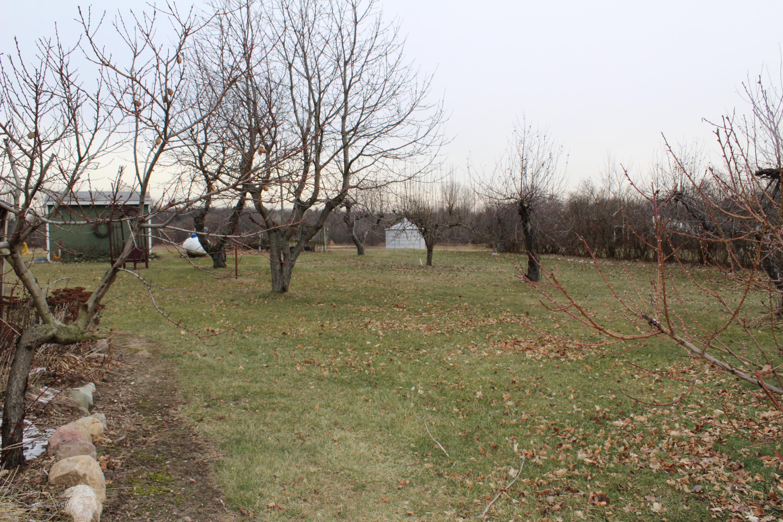 3570 Webberville Rd - fruit trees - 10
