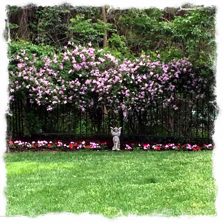 3631 Beech Tree Ln - 3631 Beech Tree Flowering Bushes - 60