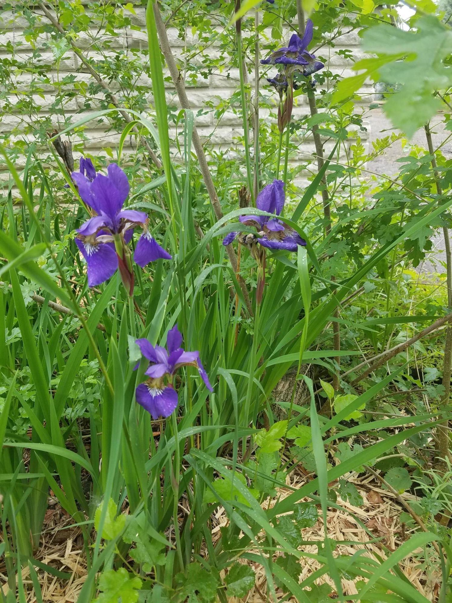 4111 Clayborn Rd - 36 Flowers - 41