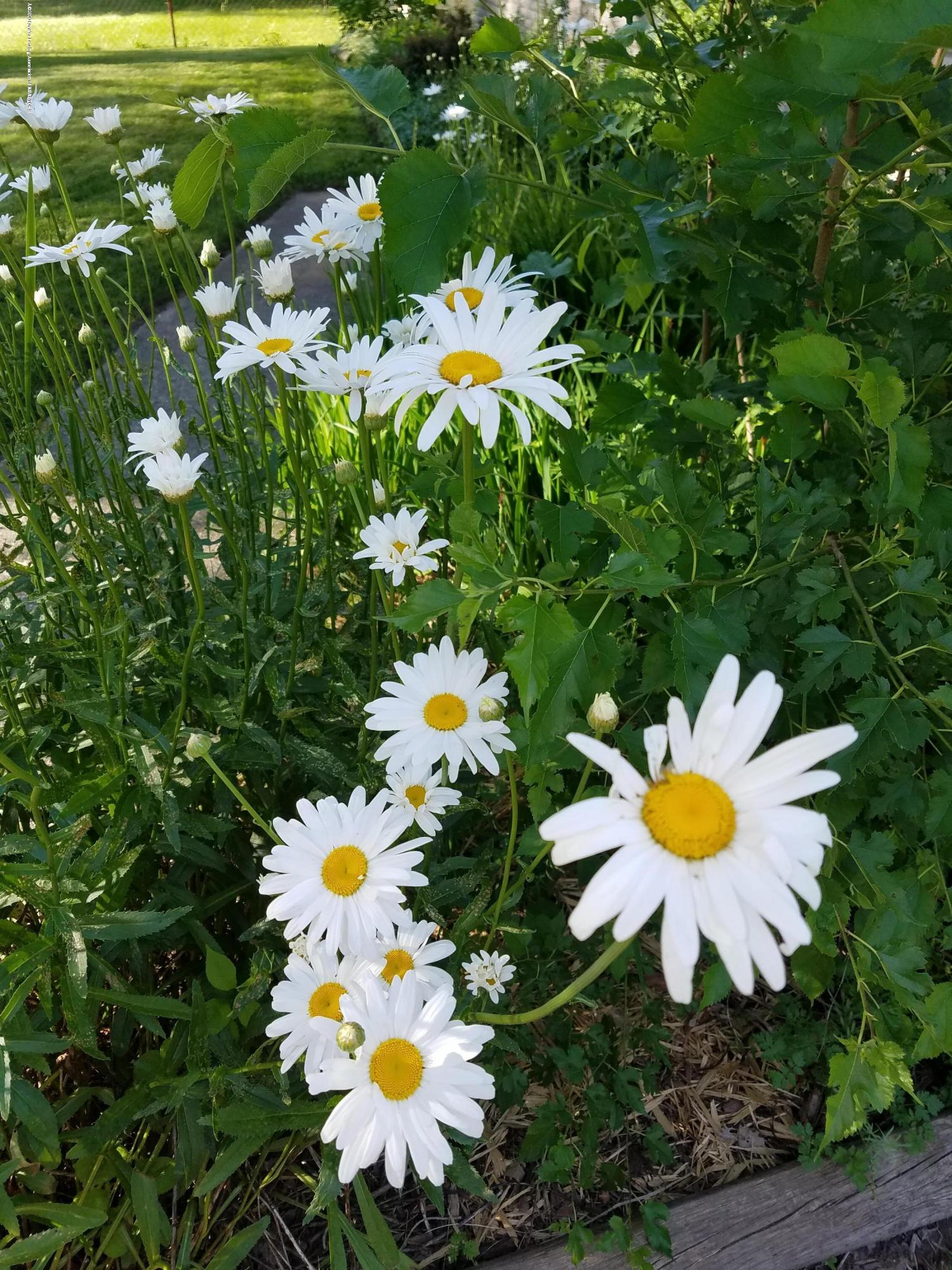 4111 Clayborn Rd - 38 Flowers - 43