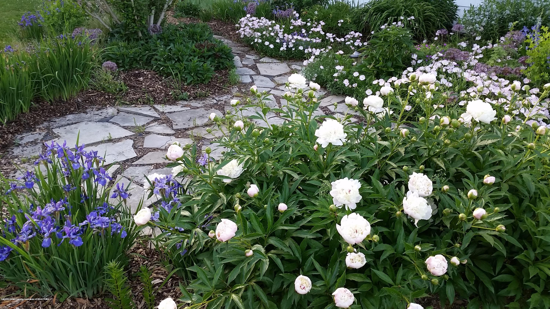 1165 Harper Rd - Flower filled walk way - 50