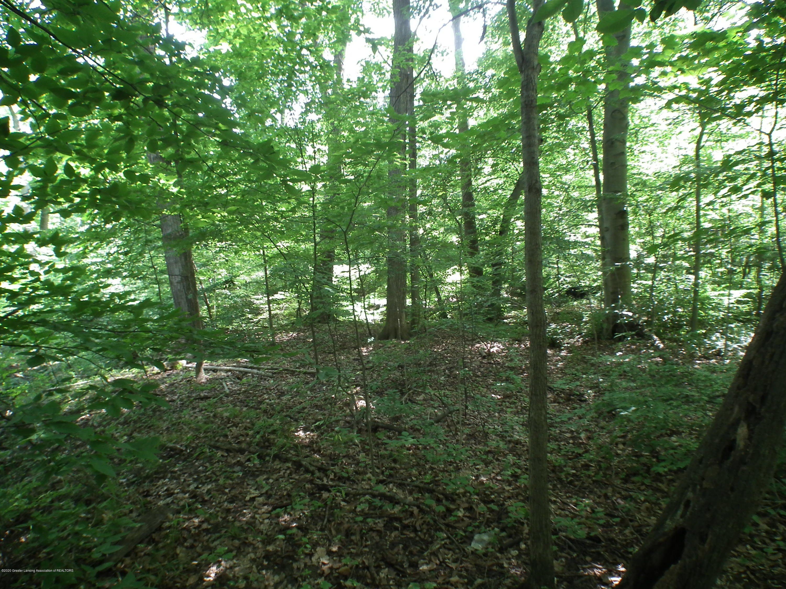 5600 Grand River Dr - Trees on Vacant Lot - 50
