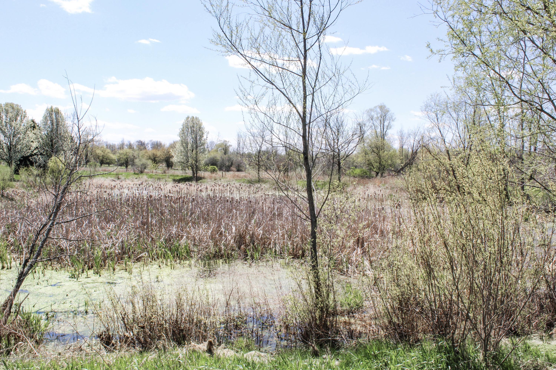 1086 Williamsburg Ct - Pond - 49