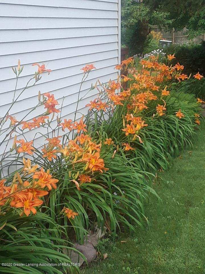 968 Touraine Ave - Summer daylilies - 39