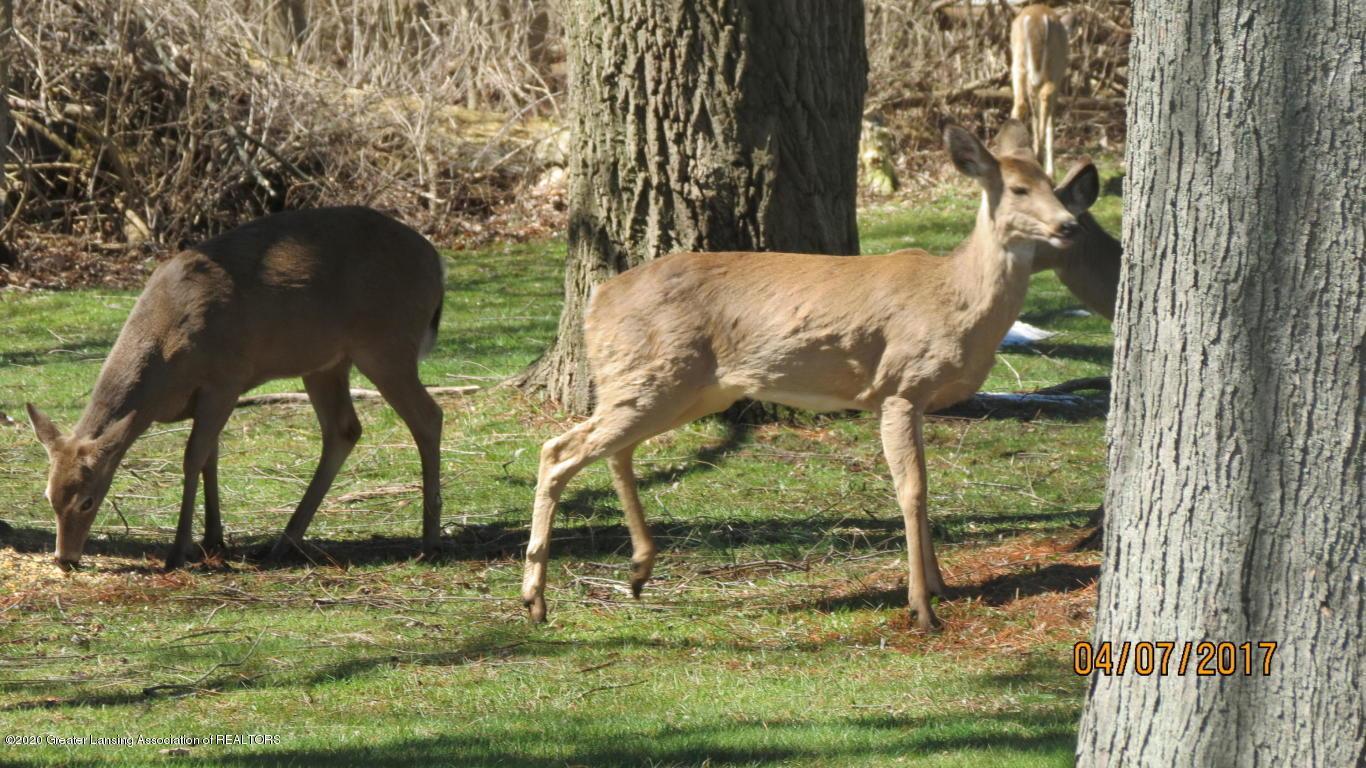 4383 Lansing Rd - Deer - 38