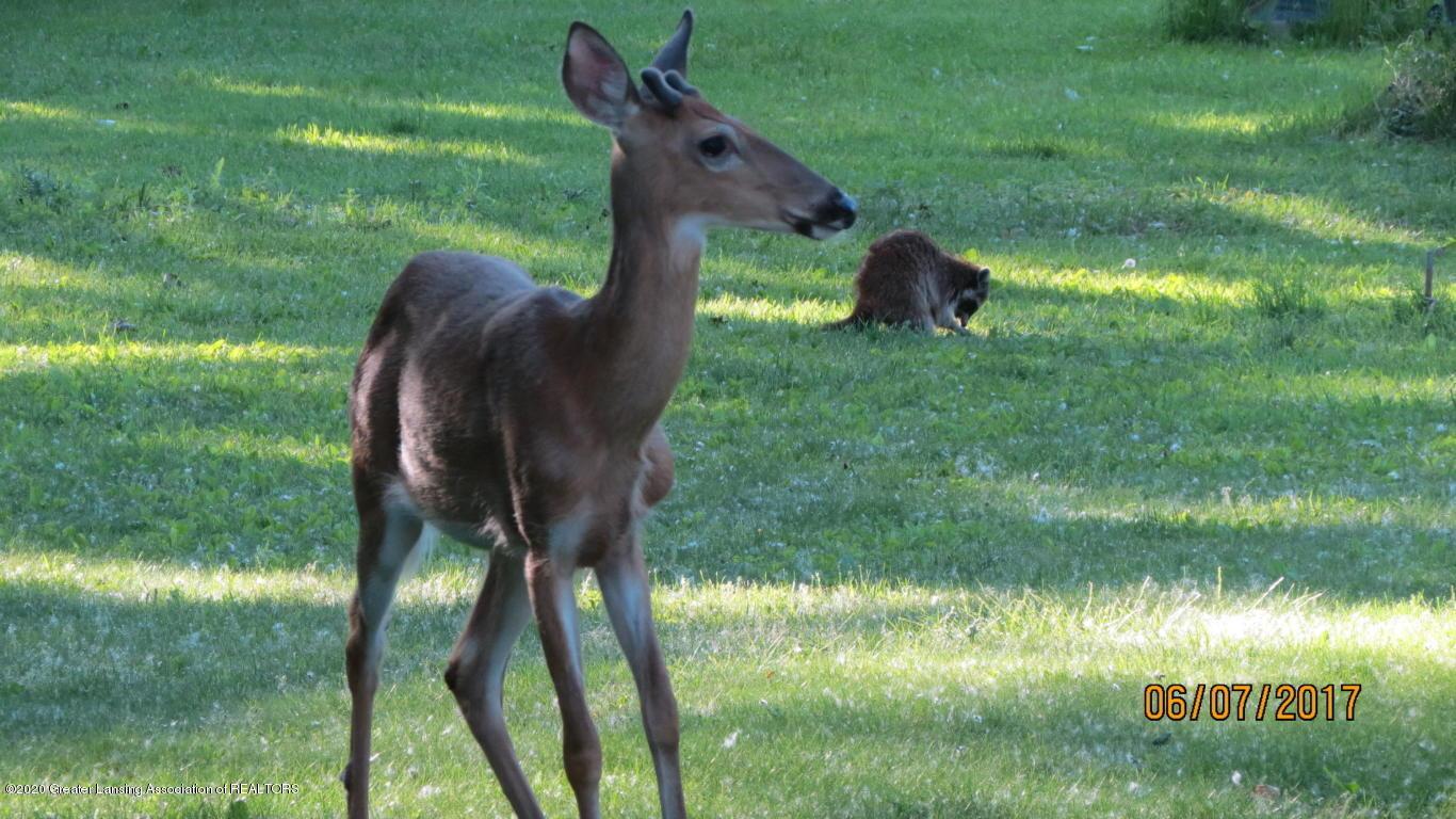 4383 Lansing Rd - Deer - 39