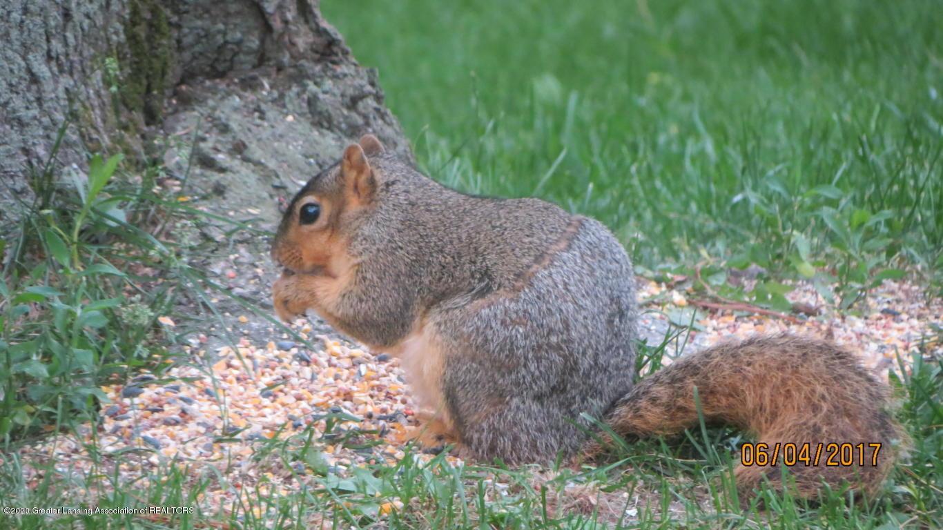 4383 Lansing Rd - Squirrels - 40