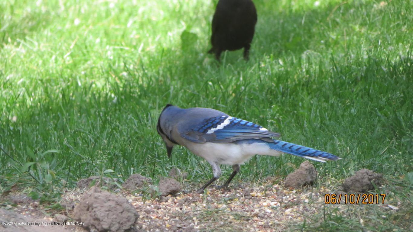4383 Lansing Rd - Birds - 42