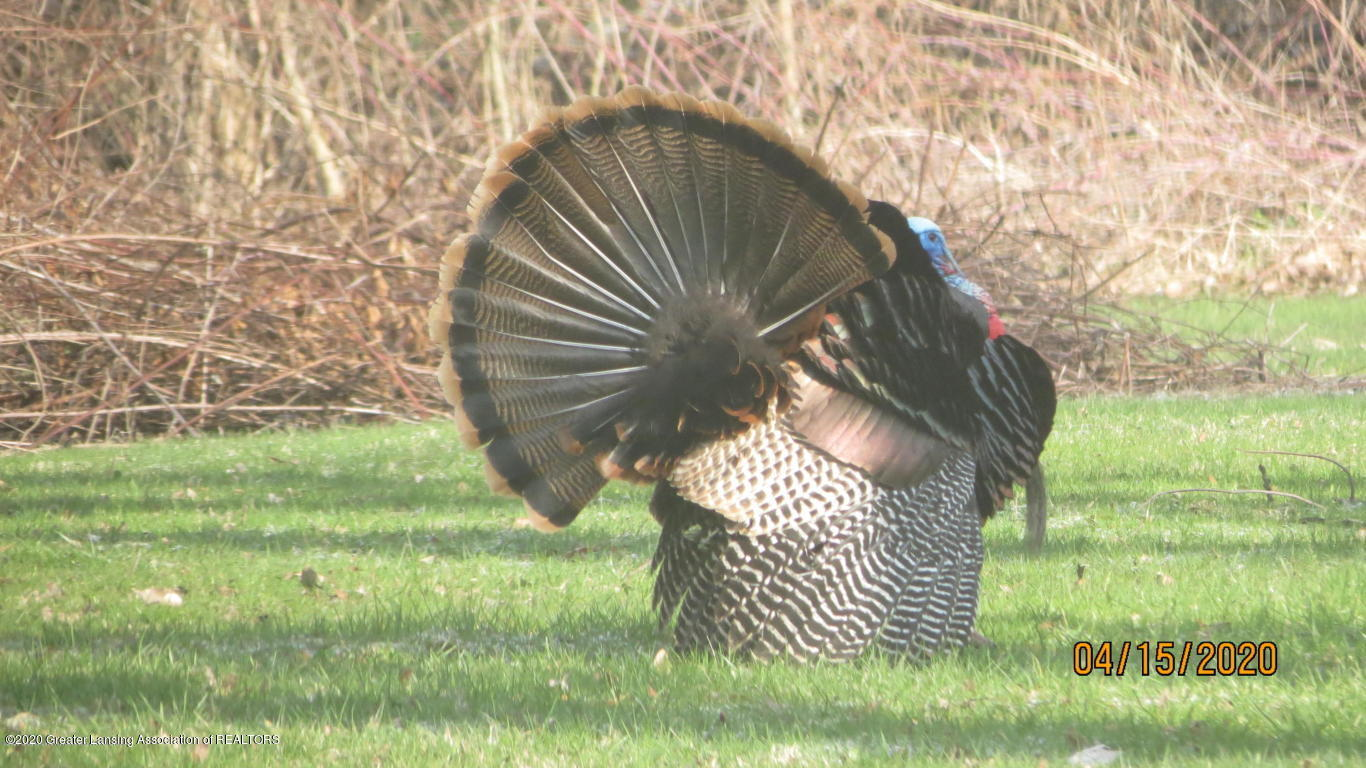 4383 Lansing Rd - Turkeys - 43