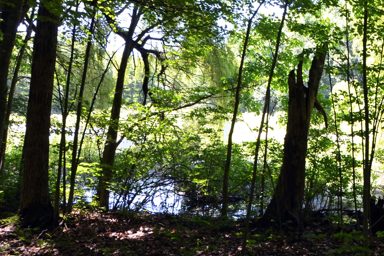 1670 Milton Rd - Pond - 33