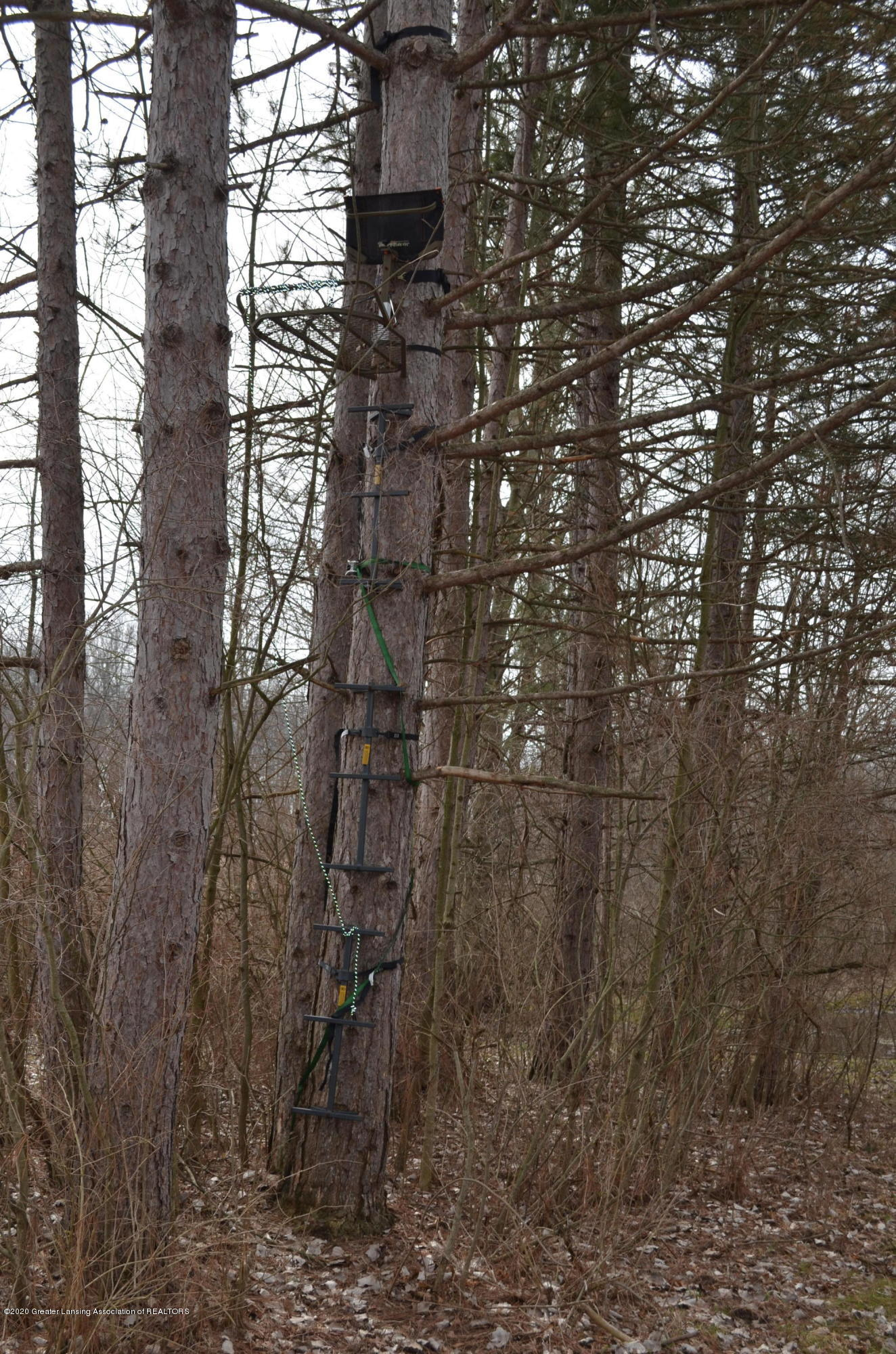 1165 Harper Rd - Tree Stand - 61