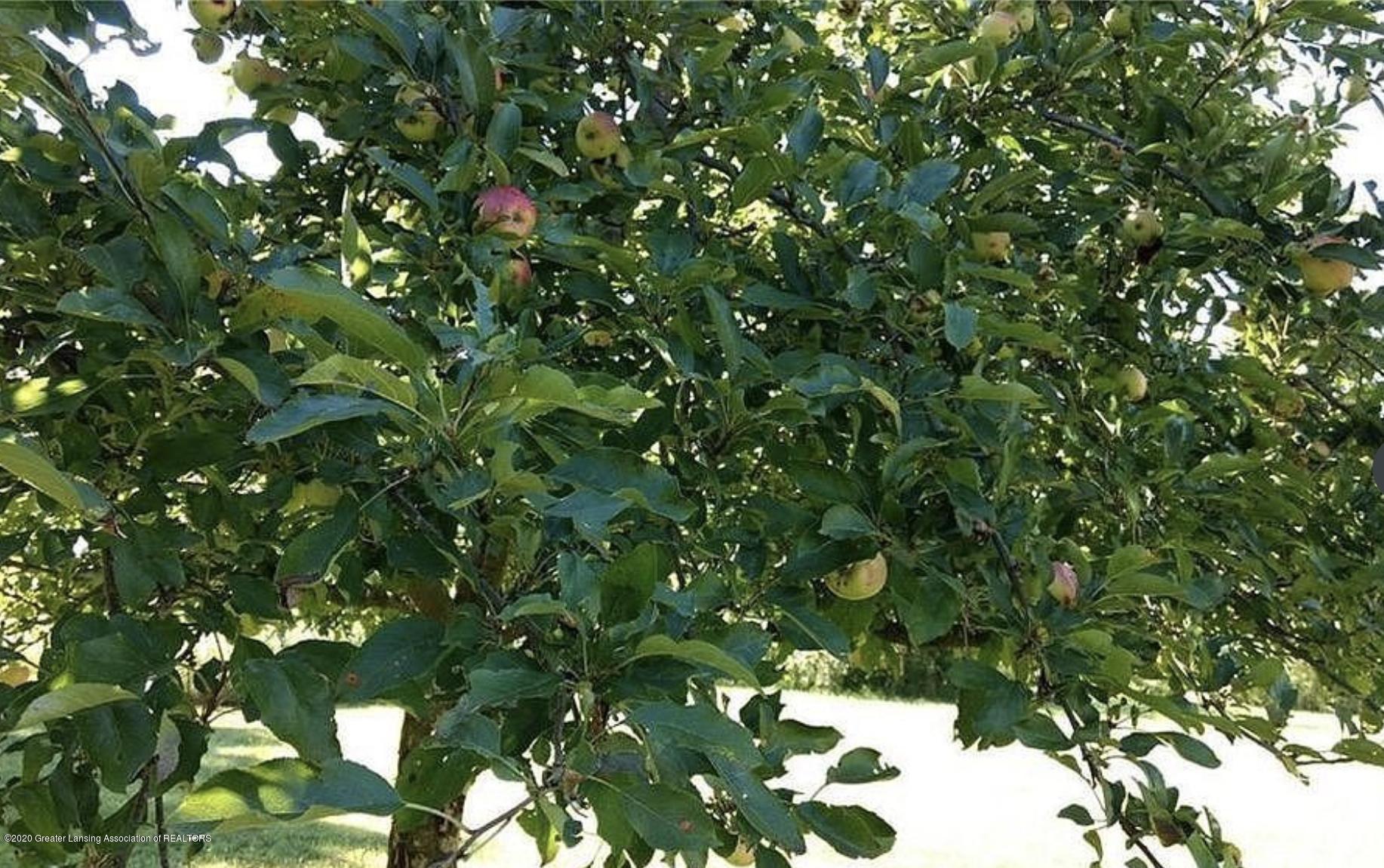 V/L Moyer Rd - Fruit Trees - 2