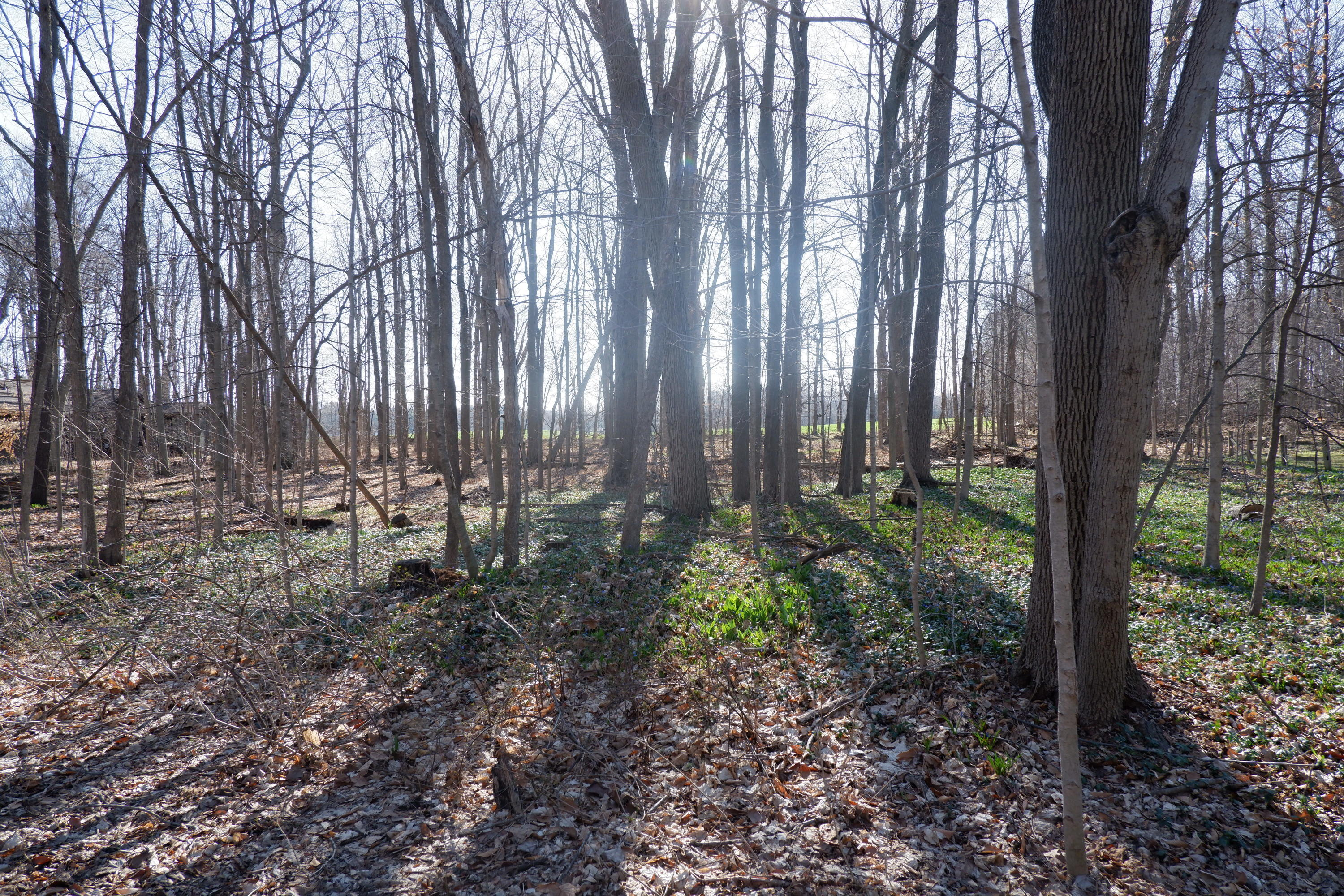 Lot 17 Ramparte Path - Large wooded lot - 1