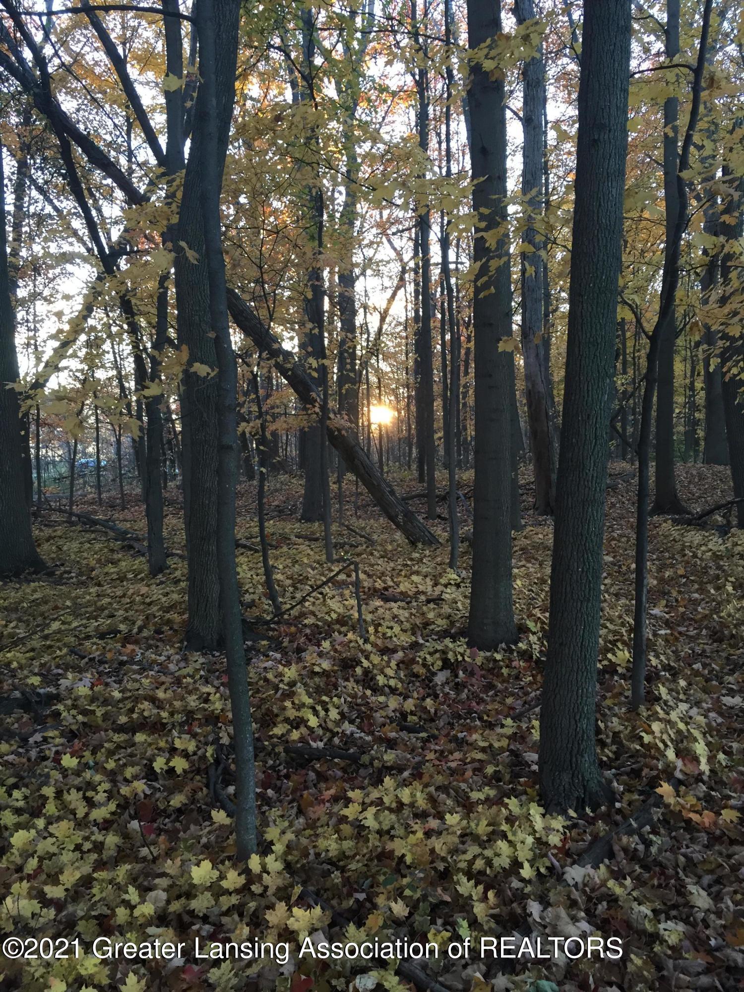 740 Linn Rd - woods 2 - 22