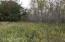 View of some of the trees--poplar, hardwoods, and open area in center of 80 ac