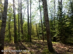 Lot1 Blk3 Co Rd 119 Road, Nevis, MN 56467