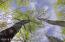 TBD Osprey Trail, Tract 2, Laporte, MN 56461