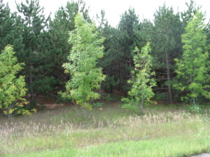00000 3 Lakes Road Road, Ottertail, MN 56571