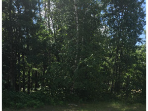 16 Golf View Trail, Pequot Lakes, MN 56472