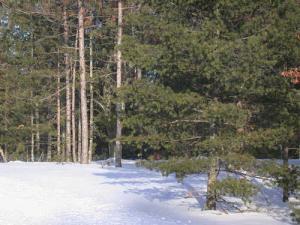 Simpson Lake Lane, Crivitz, WI 54114