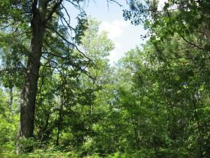 Bear Run, Athelstane, WI 54104