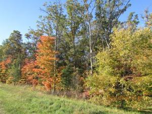 Beautiful in autumn!