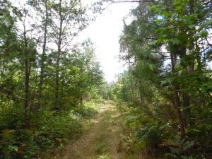 Trails run throughout acreage