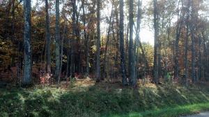 40 Acres Jankowski Lane, Crivitz, WI 54114