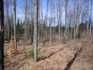 9.72 Acres Wontor Road, Amberg, WI 54102